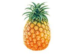 ananas-730x548